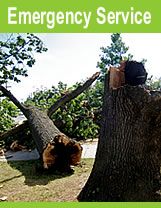 Tree removal cost Specialist tree services