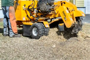 Cheap Stump Grinding Cheap Tree Removal charles