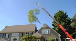 we acre trees removal whit crane