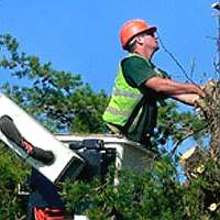 Long Island Tree Services
