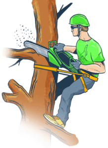 Tree removal Amityville Suffolk County