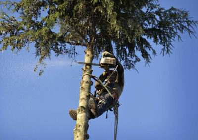 Emergency-Tree-Services-in-Long-Island-2