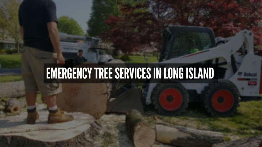 Emergency Tree Services in Long Island
