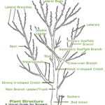 How prun trees