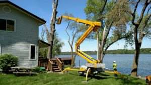 Tree removal whit spider lift