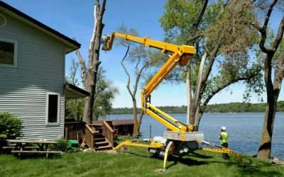 Tree removal,Tree Services.Stump Removal