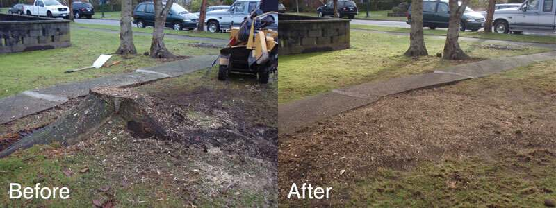 after before stump removal Long island ny