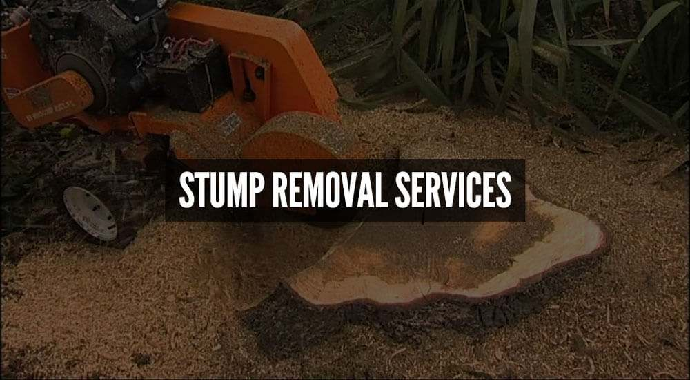 stump-removal-services