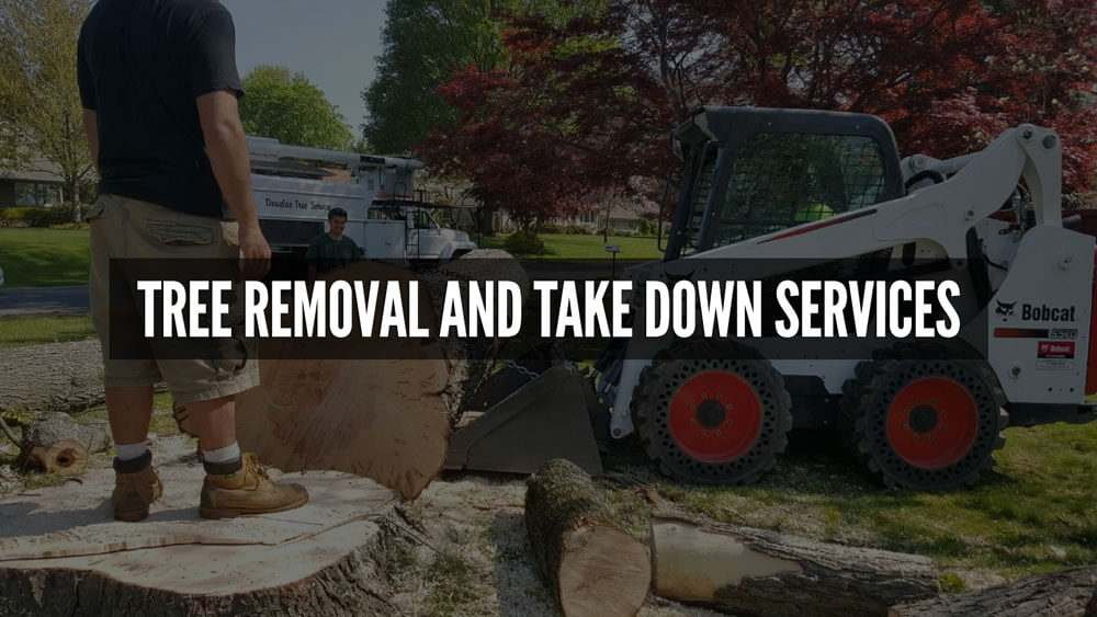 tree-removal-and-take-down-services
