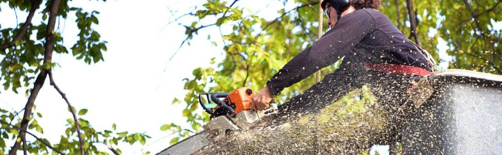 Top Tree removal long Island