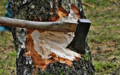 Tree Cutting Near To Nassau County Tree removals in Your area