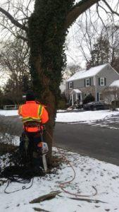 Tree services near my location tree removal service stump removal and tree cutting service