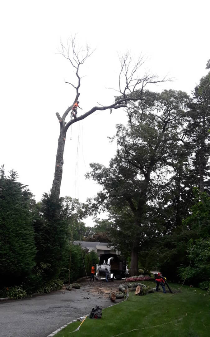 Tree Removal cost Average Estimate?