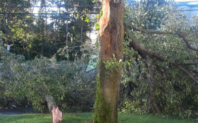 Tree cutting Cost Tree Service Average Estimate
