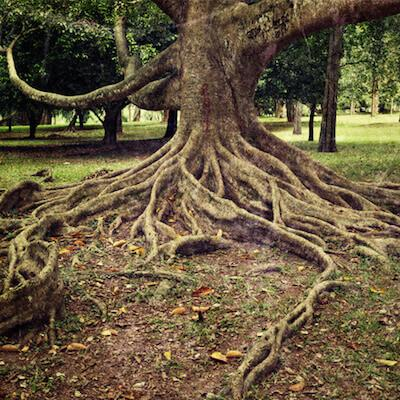 Root system Means  There is trees their roots spread all Over this typical stump Removal it My cost More for Removal than Normal Tree Roots