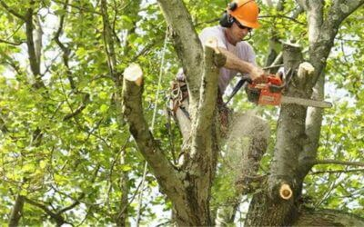 Tree Removal Guide Tips