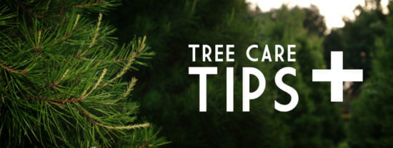 How Care Tree Pruning