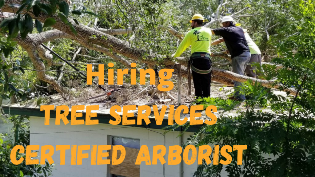 When should I hire an arborist? Here we listed many reasons you should hire an arborist for your tree care needs. They are properly trained in tree care.  Their experience can help protect your money and property. They can work on trees safely. Arborists have the proper kits for the job. oHow much time will you need for this project? Who will be answerable for cleaning? What is the whole project price? oWhat is the payment method? iIf I would like more to be done, what you charge per hour?