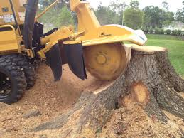 stump removal How Grind stump