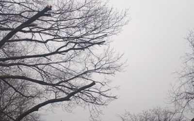 Tree Trimming – Tree Pruning for Beginners