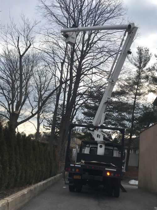 Average Cost of Tree Trimming